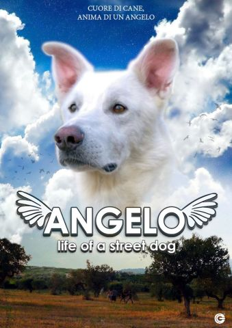 Angelo - Life of a Street Dog , Drammatico, Italia